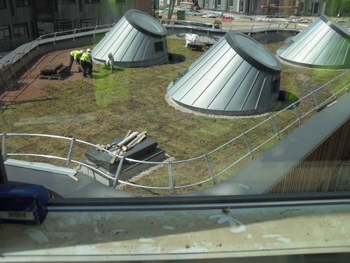 Laying grass on the roof of the pod June 2010